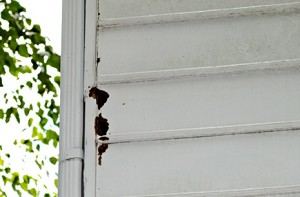 Bird & Pest Siding Damage from Good Guys Contracting in Long Island NY